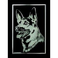 Собаки / Волки